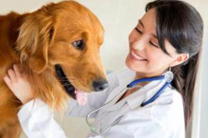 Animal Hospital in Edmonton, veterinary hospital in Edmonton
