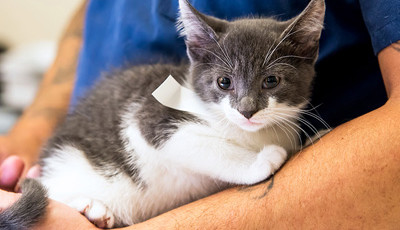 Common Myths About Spaying and Neutering That You Need To Avoid