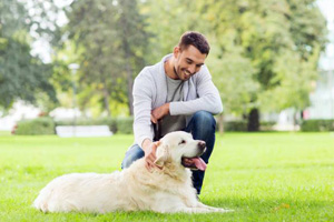 Possible Reasons for Your Dog to be Under Stress