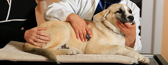 Experienced Veterinarians in Edmonton